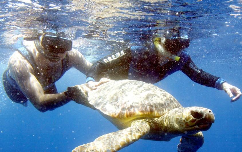 Liberación de una tortuga rehabilitada