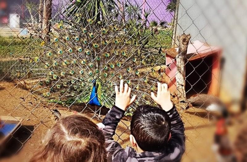 niños con pavo real