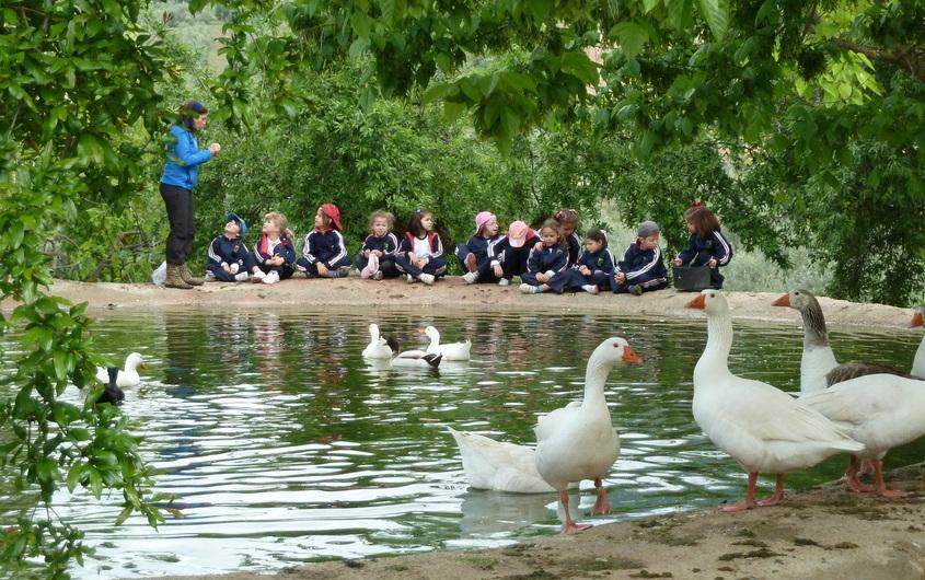 estanque patos granja escuela parapanda