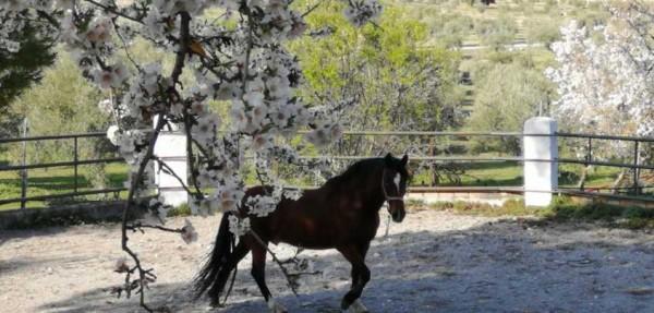 caballo granja escuela parapanda